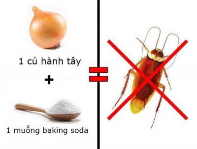 """3 cách đuổi sạch muỗi, gián, kiến ra khỏi nhà """"dễ như ăn kẹo"""" mà không cần dùng hóa chất"""