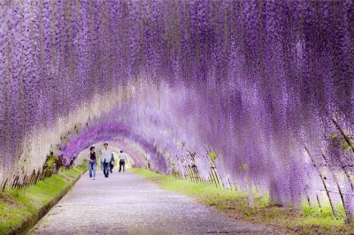 Lạc vào những con đường đẹp như mơ khiến bạn tin rằng cổ tích là có thật