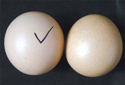 5 mẹo vặt giúp bạn nhận biết trứng gà bị tẩy trắng cực chính xác