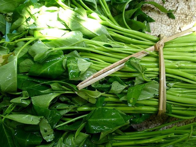 Cứ dùng chất này phun rau hôm trước là hôm sau bán được luôn, bảo sao bó rau muống cứ xanh mơn mởn